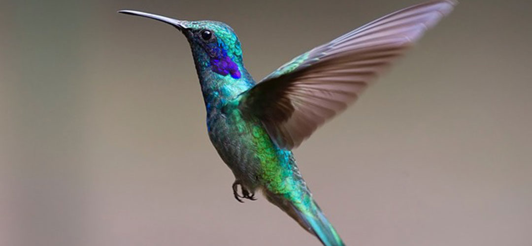Hummingbird: What You Really Need to Know